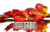 Congrats with red flowers — Stock Photo