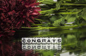 Congrats with red flowers and green leaves — Stock Photo