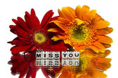 Miss you with flowers — Stock Photo