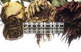 Pessimism text message — Stock Photo