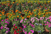 Many flowers and plants — Stock Photo