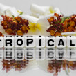 Tropical text — Stock Photo #47046307