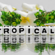 Tropical text with green and yellow — Stock Photo #47046507
