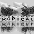 Tropical text with gray theme — Stock Photo #47046579