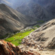 Runback village, view from the mountain top, Ladakh range, Northern India — Stock Photo