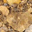 Petrified leaf, Paleontology background from Spitsbergen rocks ( - Stock Photo