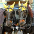 Portrait of two nice coachfellow crow horses dressed in traditional yellow cap at winter. Christmas in Vienna, Austria — Stock Photo