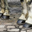 Two pair of white horse hooves on a block pavement — Stock Photo