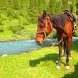Portrait of chestnut harness horse near river — Stock Photo