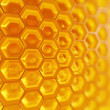 Fragment of Honeycomb - Stock Photo