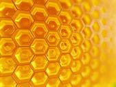 Fragment de nid d'abeilles — Photo