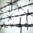 Perspective view of new barbed wire. — Stock Photo #25082267