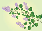 Vector blossoming branch of lilac — Stock Vector