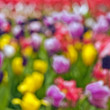 Royalty-Free Stock Photo: Blur tulips in painting-like style