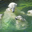 Bathing family of polar bears — Stock Photo #23496023