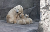 Madre de oso polar con sus cachorros — Foto de Stock