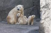 Familj med isbjörnar — Stockfoto