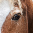 Stock Photo: Eye to eye with grace red horse with white stripe on face. Close up portrait of beautiful mare, looking straight into camera.