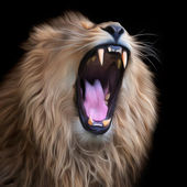 Huge teeth of an Asian lion, isolated on black background. The King of beasts, biggest cat of the world. The most dangerous and mighty predator of the world with open chaps. Square vector image. — Stock Vector