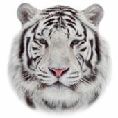 Face of a white bengal tiger, isolated on white background. Amazing mask of the biggest cat. Wild beauty of the most dangerous and mighty beast of the world. Vector image in mosaic style. — Stock Vector