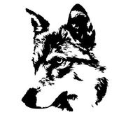 The head of a young wolf female, isolated on white background. Side face portrait of a forest dangerous beast, Canis lupus lupus. Beauty of the wildlife. Amazing black and white vector image. — Stock Vector