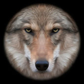 Eye contact with a severe wolf female through the lens. Menacing expression of the european wolf, very beautiful animal and extremely dangerous beast. Amazing vector image in oil painting style. — Stock Vector