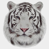Face portrait of a white bengal tiger, isolated on white background. Amazing mask of the biggest cat. Wild beauty and charm of the most dangerous, but cute and cuddly beast of the world. Vector image. — Stock Vector