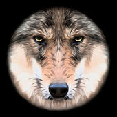 Eye contact with a severe wolf female through the lens. Menacing expression of the european wolf, very beautiful animal and extremely dangerous beast. Amazing vector picture in oil painting style. — Stock Vector