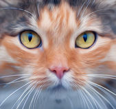 Look into your soul of an extremely beautiful cat female. Eye contact through the lens with widely open feline pupils with bright yellow iris. Unusual vector image in oil painting style. — Stock Vector