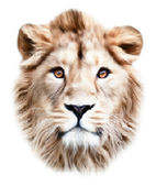 The face of an Asian lion, isolated on white background. The King of beasts, biggest cat, looking straight into the camera. The most dangerous predator. Vector dotted image with high resolution. — Stockvector