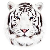 Face of a white bengal tiger, isolated on white background. Amazing mask of the biggest cat. Wild beauty of the most dangerous, but cute beast. Unusual vector animal dotted image with high resolution. — Stock Vector