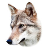 The head of a young european wolf female. Side face portrait of forest beast, Canis lupus lupus, isolated on white background. Amazing dotted vector image of wild natural beauty with high resolution. — Stock Vector