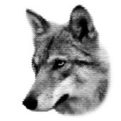 The head of a european wolf female. Side face portrait of a forest dangerous beast, Canis lupus lupus, isolated on white background. Amazing dotted black and white vector image of wild natural beauty. — Stock Vector