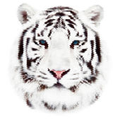 Face portrait of a white bengal tiger, isolated on white background. Amazing mask of the biggest cat. Wild beauty of the most dangerous, but cute and cuddly beast. Unusual vector animal dotted image. — Stock Vector