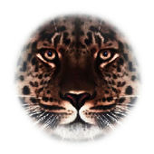 Face of an Amur leopard, looking in your eyes, the most beautiful animal and very dangerous beast. Amazing mask of the big cat, isolated on white background. Vector dotted image with high resolution. — Stock Vector