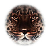 Face of an Amur leopard, looking in your eyes, the most beautiful animal and very dangerous beast. Amazing mask of the big cat, isolated on white background. Unusual vector image, made of big dots. — Stock Vector