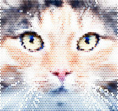 Piercing look into your soul of an extremely beautiful cat female. Eye contact through the lens with widely open feline pupils with bright yellow iris. Unusual vector animal image, made of big dots. — Stock Vector