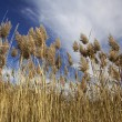 Tall Grasses — Stock Photo #18489041