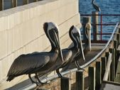 Pelicans sitting on a rail on the pier. — Stock Photo