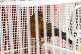 Sparrow in cage — Stock Photo
