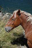Lakeside horse — Stock Photo