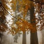 forêt d'arbres et de brouillard — Photo #22426969