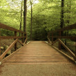 Foto Stock: Wooden bridge in green forest
