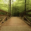Foto de Stock  : Wooden bridge in green forest