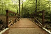 Puente de madera en el bosque verde — Foto de Stock