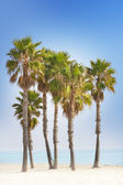 Palm trees and blue beach — Stock Photo