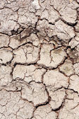 Dried soil — Stock Photo