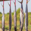 Salted Spanish Mackerel — Stock Photo
