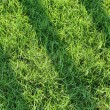 Green Grass filed — Stock Photo