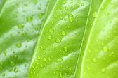Wet leaf — Stok fotoğraf